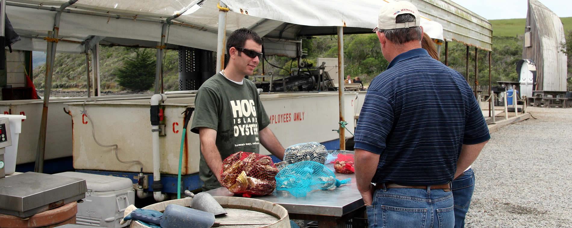 oysters marshall california point reyes national seashore