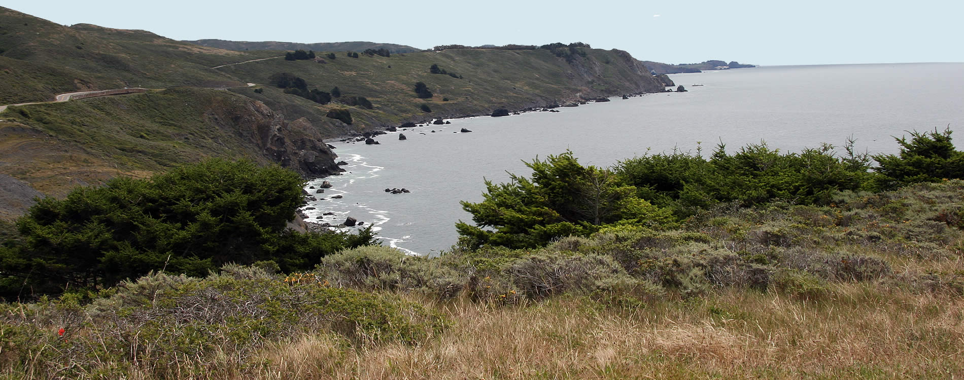 point reyes national seashore - muir beach & muir woods